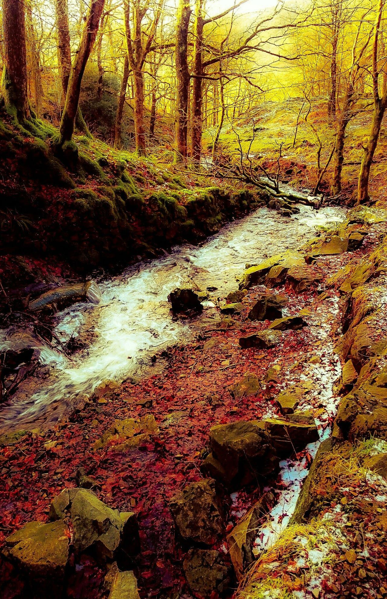 Autumn Colors Stream - Flowing Water Colour Image Off The Beaten Path Wood Art Lake District Tranquility Cumbria England UK Outdoors Forest Beauty In Nature Colourful Nature Day Tree Art Colorsplash Trippy! Fantasy No People Growth WoodLand Sunlight Outdoor Photography Bautiful Day Project Backgrounds