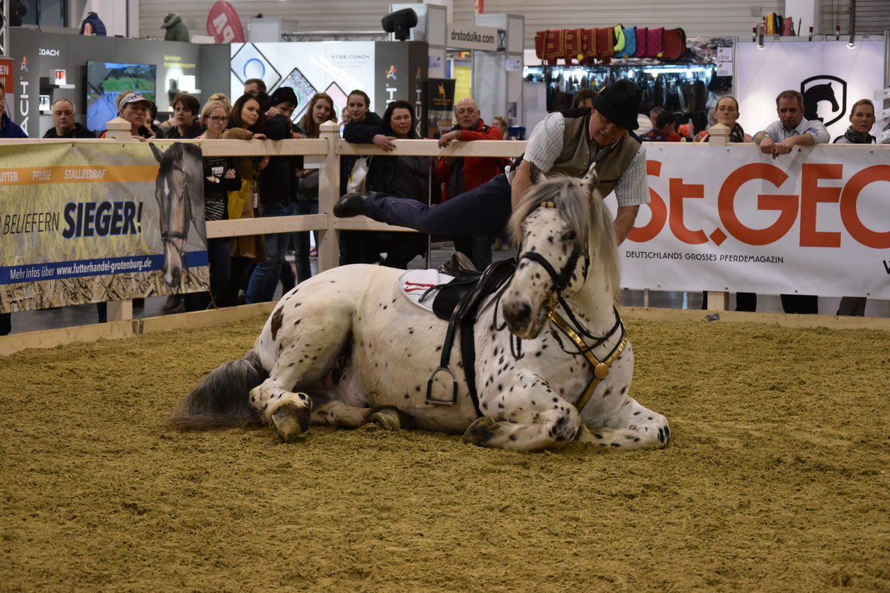Equitana Horse Horse Show Laying Down Performance Rider Show Sports Photography Österreich