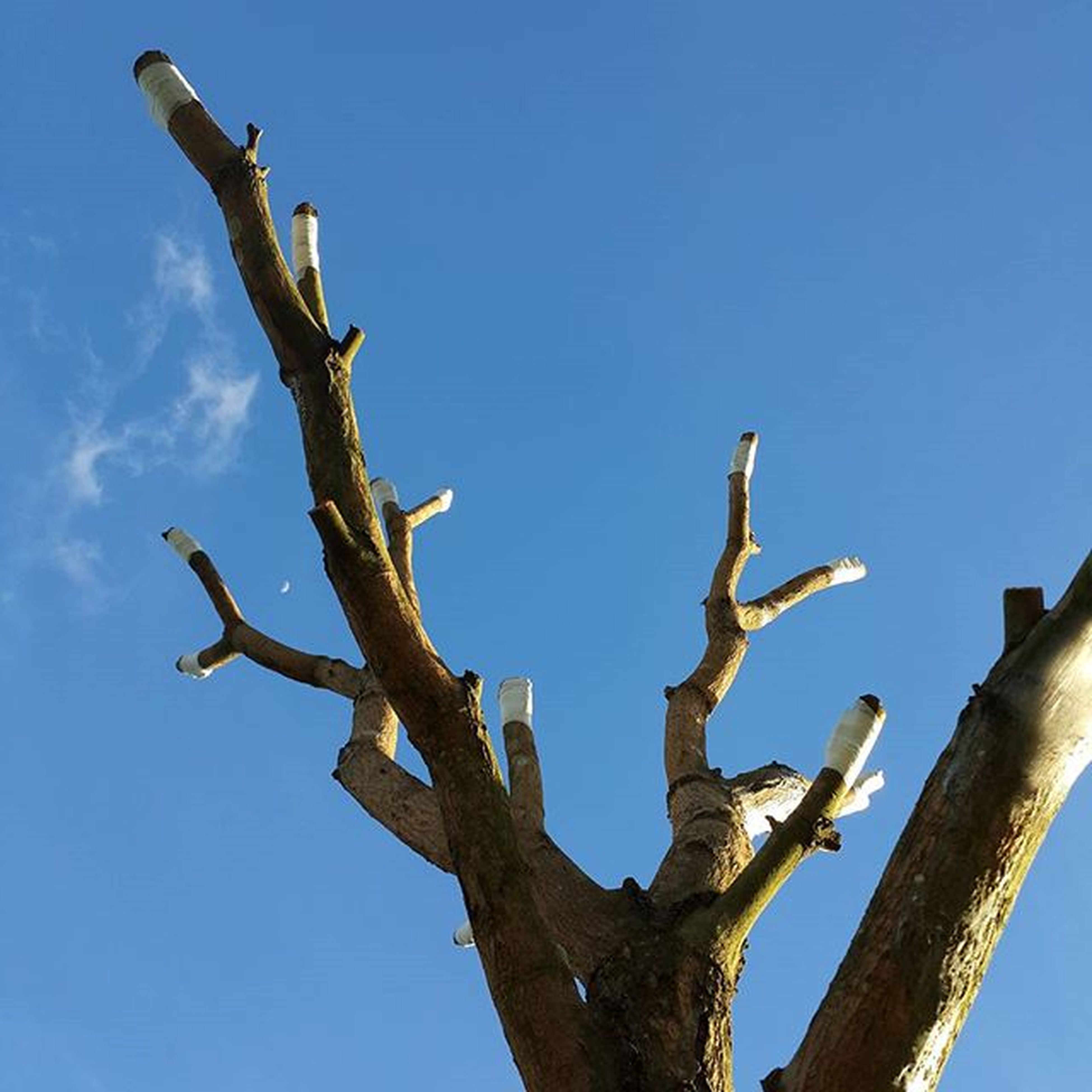 low angle view, clear sky, blue, branch, tree, bare tree, nature, sky, bird, tree trunk, day, copy space, perching, outdoors, dead plant, no people, wood - material, tranquility, animal themes, wildlife