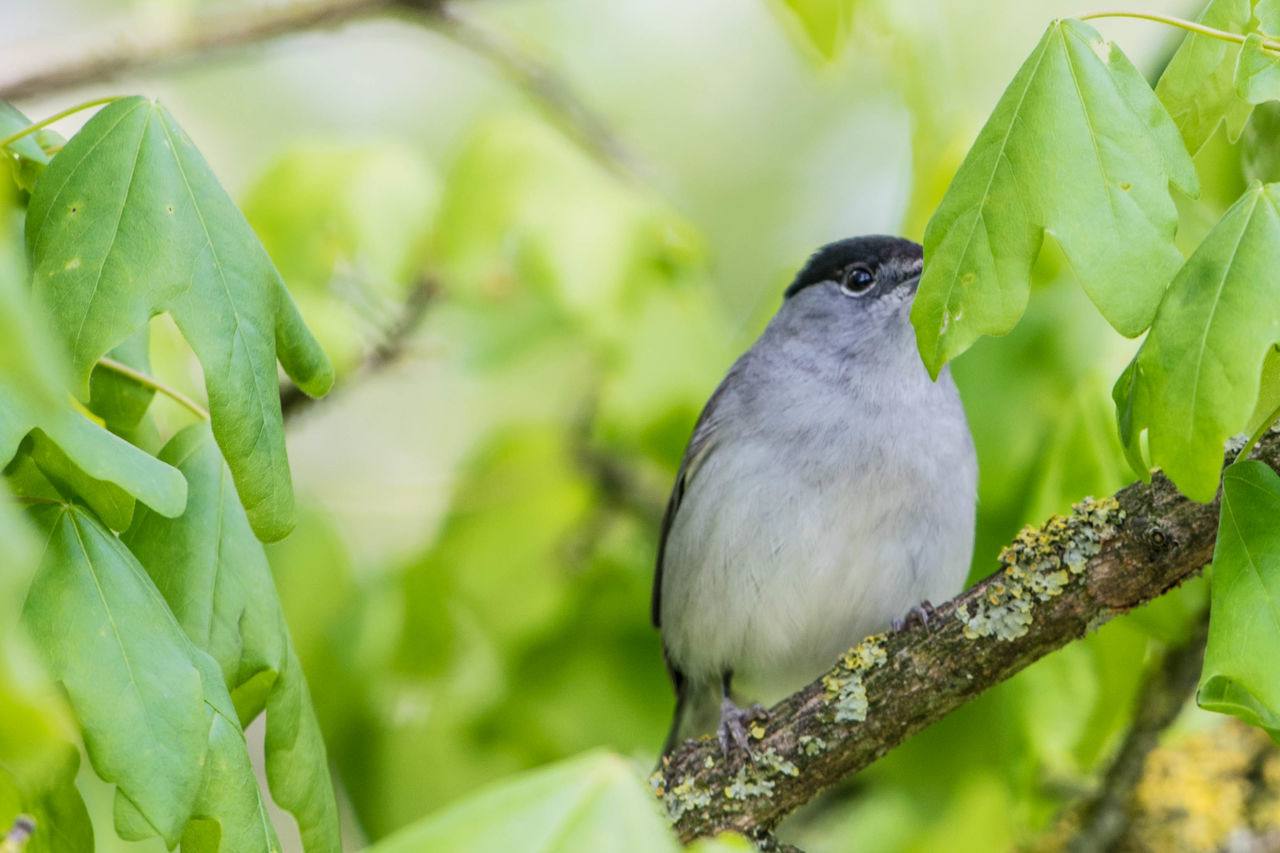 one animal, animal themes, animals in the wild, bird, animal wildlife, perching, green color, leaf, focus on foreground, nature, day, no people, close-up, growth, plant, beauty in nature, outdoors, beak