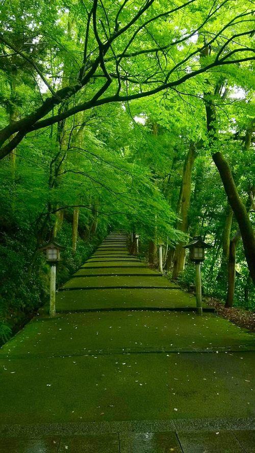Shrine Ishikawa-ken Hakusan Jinjya Healing Green Nature Nature Favorite Places