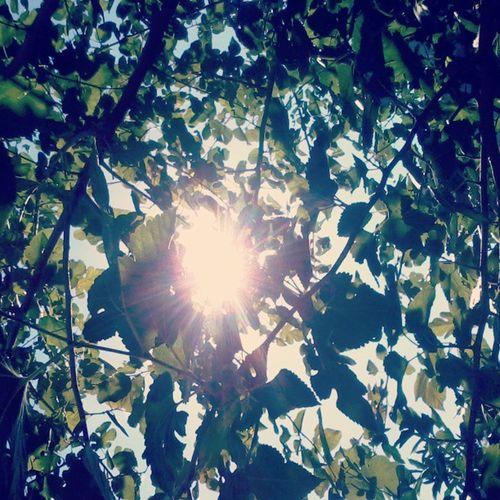 Leaf Sky Coloursoffreedom Picoftheday Photogram Sunshining
