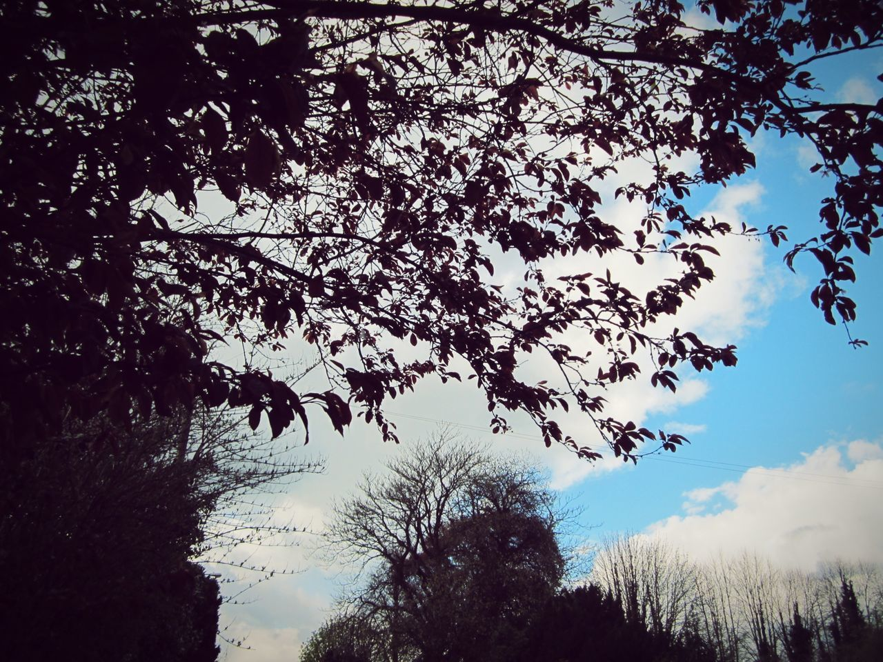 ◽ in the frame again◽ April 2016 Nature_collection Landscape_collection EyeEmNatureLover Frame It Tree_collection  Trees And Sky Eyeem Nature The Moment Catching The Moment Sky_collection Urban Landscape