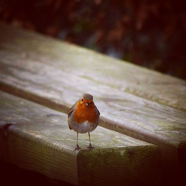 [ little red ] 🐥 🐥▶▶▶▶▶▶▶▶▶▶▶▶▶▶▶▶▶▶▶▶▶▶▶▶ Instabirds Ig_animals Ig_birds Ig_europe Ig_ireland Animals All_shots Birds Colorful Featheredfriends Kiss Lowlight Notiphone Pentax Pentaxian Red Simple Vignette Wild Woods