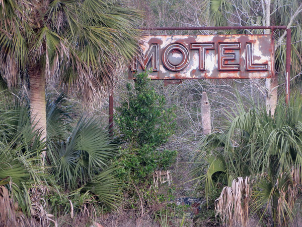 Abandoned Motel American South Deterioration Lush Foliage Motel Sign North Florida Old Overgrown Palm Trees Run-down Southern Atmosphere Southern Vibe The South