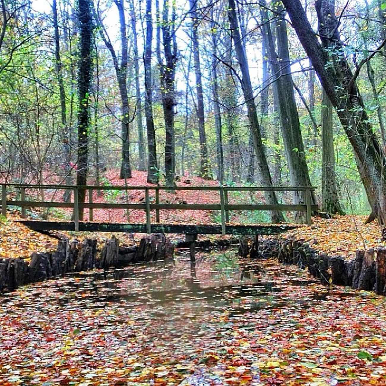 Sklblog Salzdetfurth Autumn Herbst
