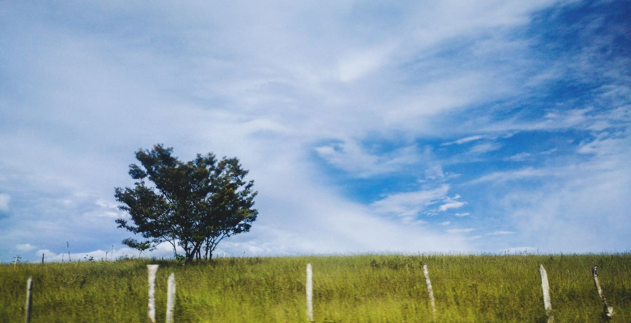 A few years ago, when I was very lost, but also very happy. Tree Blue Nature Sky No People Beauty In Nature Tranquility Cloud - Sky Outdoors Single Tree Day Melancholic Landscapes Growth Agriculture Freshness