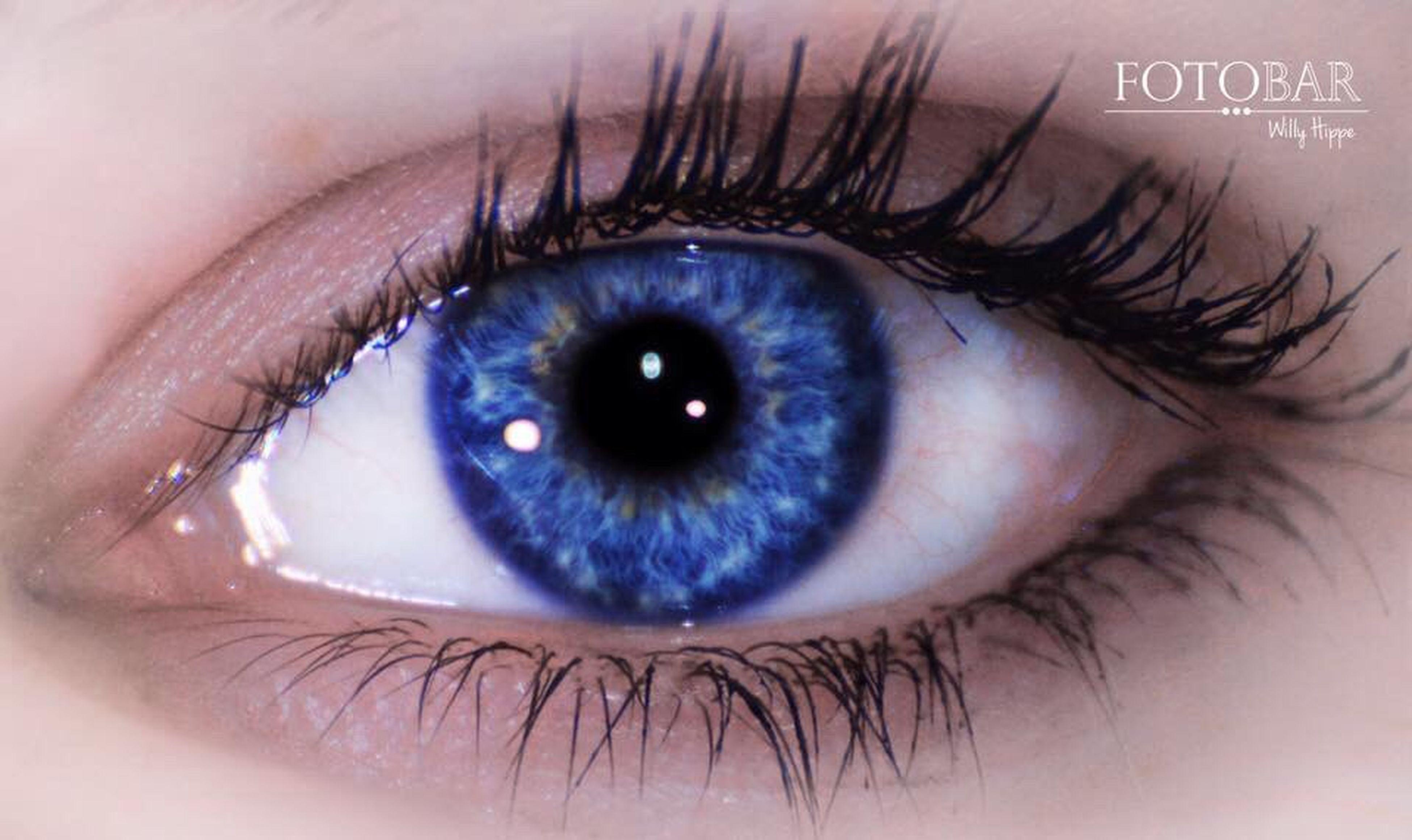 human eye, eyelash, close-up, eyesight, looking at camera, part of, sensory perception, portrait, eyeball, iris - eye, extreme close-up, human face, lifestyles, extreme close up, eyebrow, human skin, person