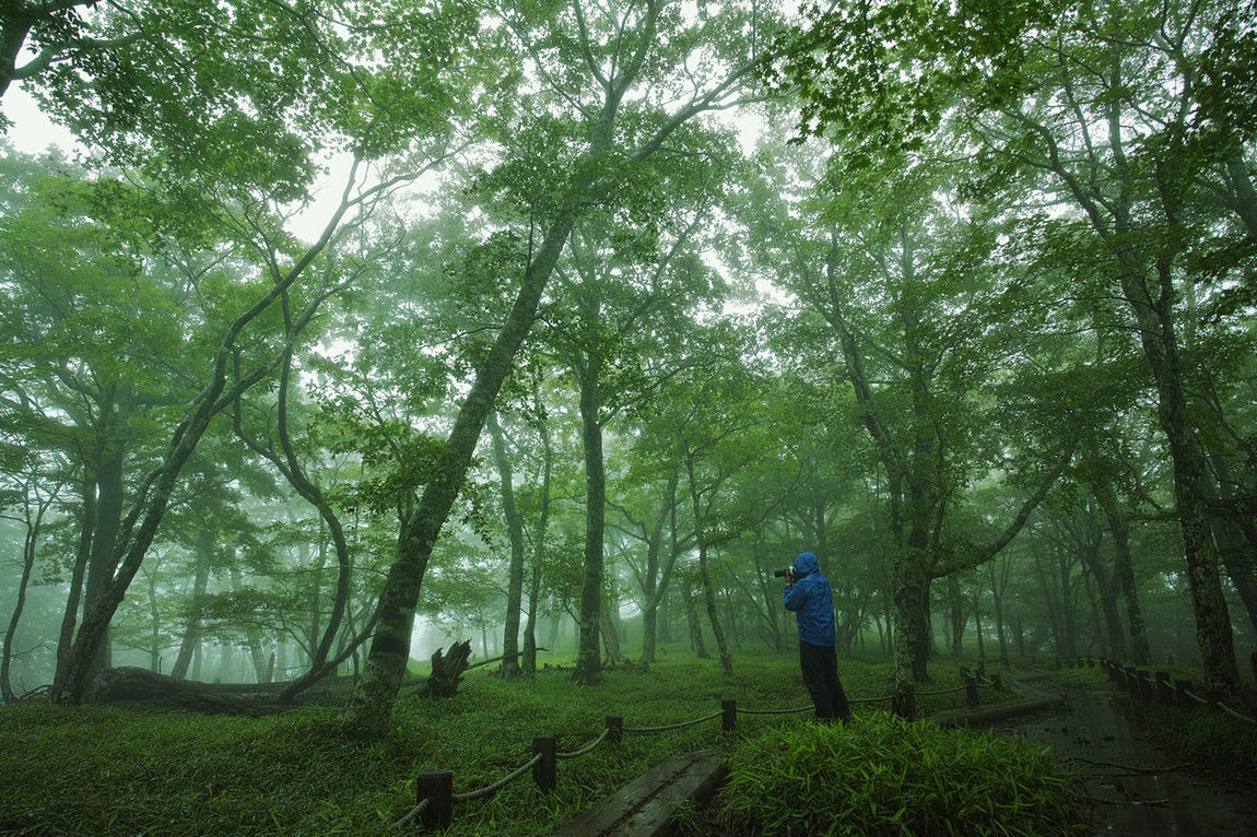 雨の大台ケ原を切り撮る Photography People Photography Landscape Landscape_Collection EyeEm Nature Lover 大台ケ原 Japan Photography Nature Beautiful Nature Green