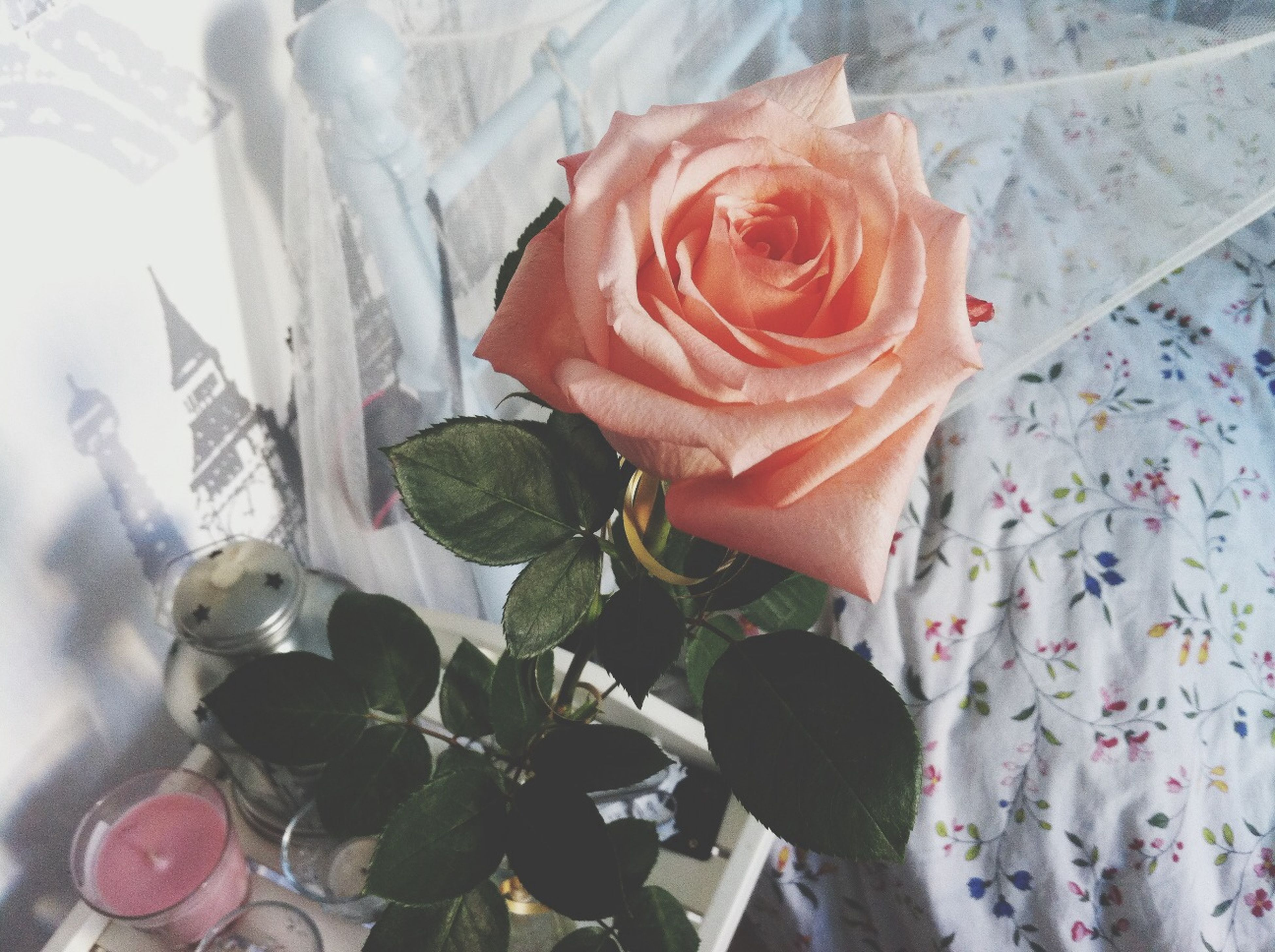 flower, rose - flower, petal, flower head, freshness, fragility, close-up, rose, beauty in nature, indoors, pink color, blooming, nature, growth, no people, high angle view, day, plant, focus on foreground, softness