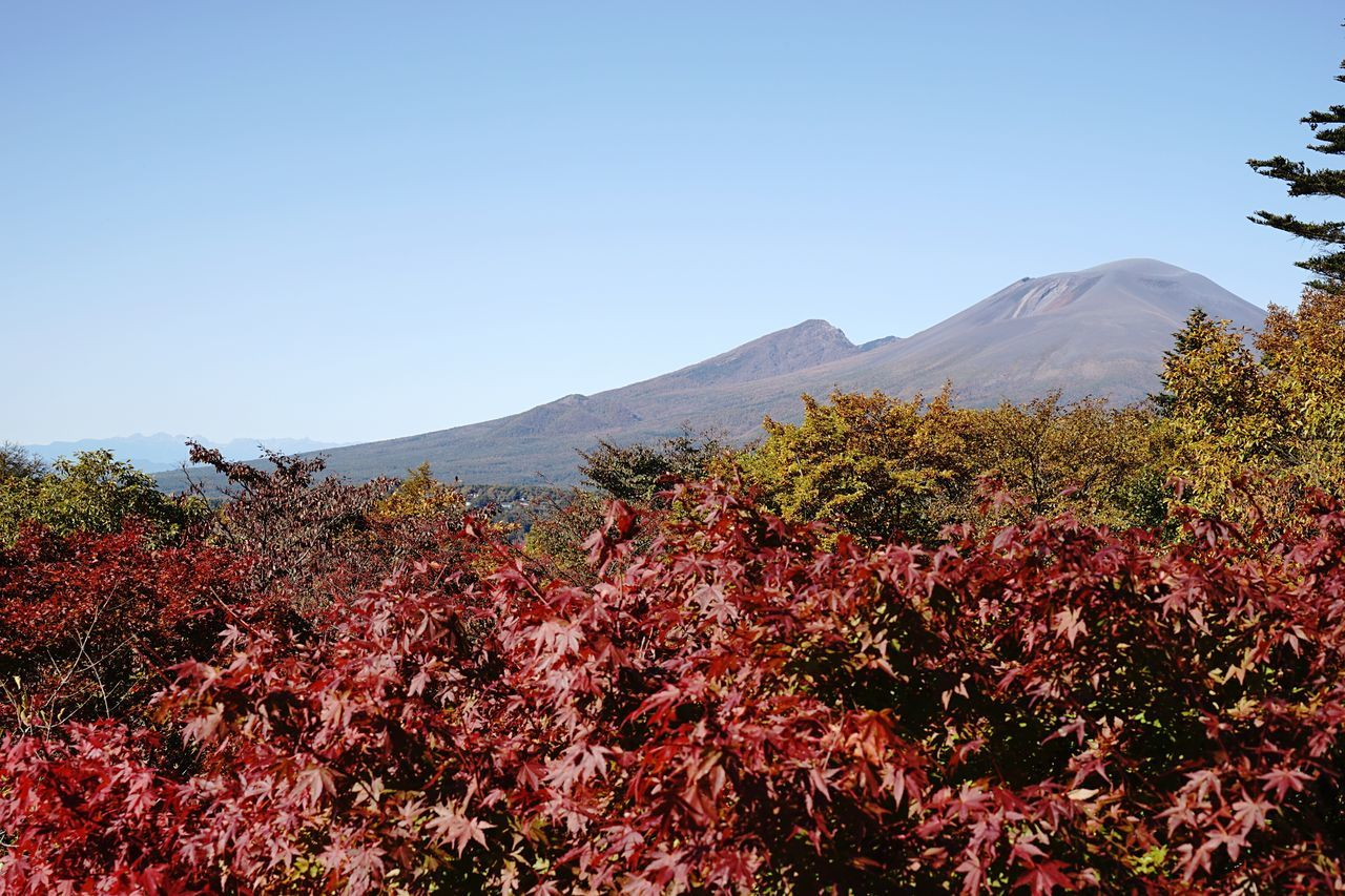 My Year My View Mountain Beauty In Nature Clear Sky Nature Scenics Growth Outdoors Tree Day Landscape Tranquil Scene No People Plant Tranquility Freshness Autumn Multi Colored EyeEm Nature Lover Tranquility Change Long Exposure Mt.asama