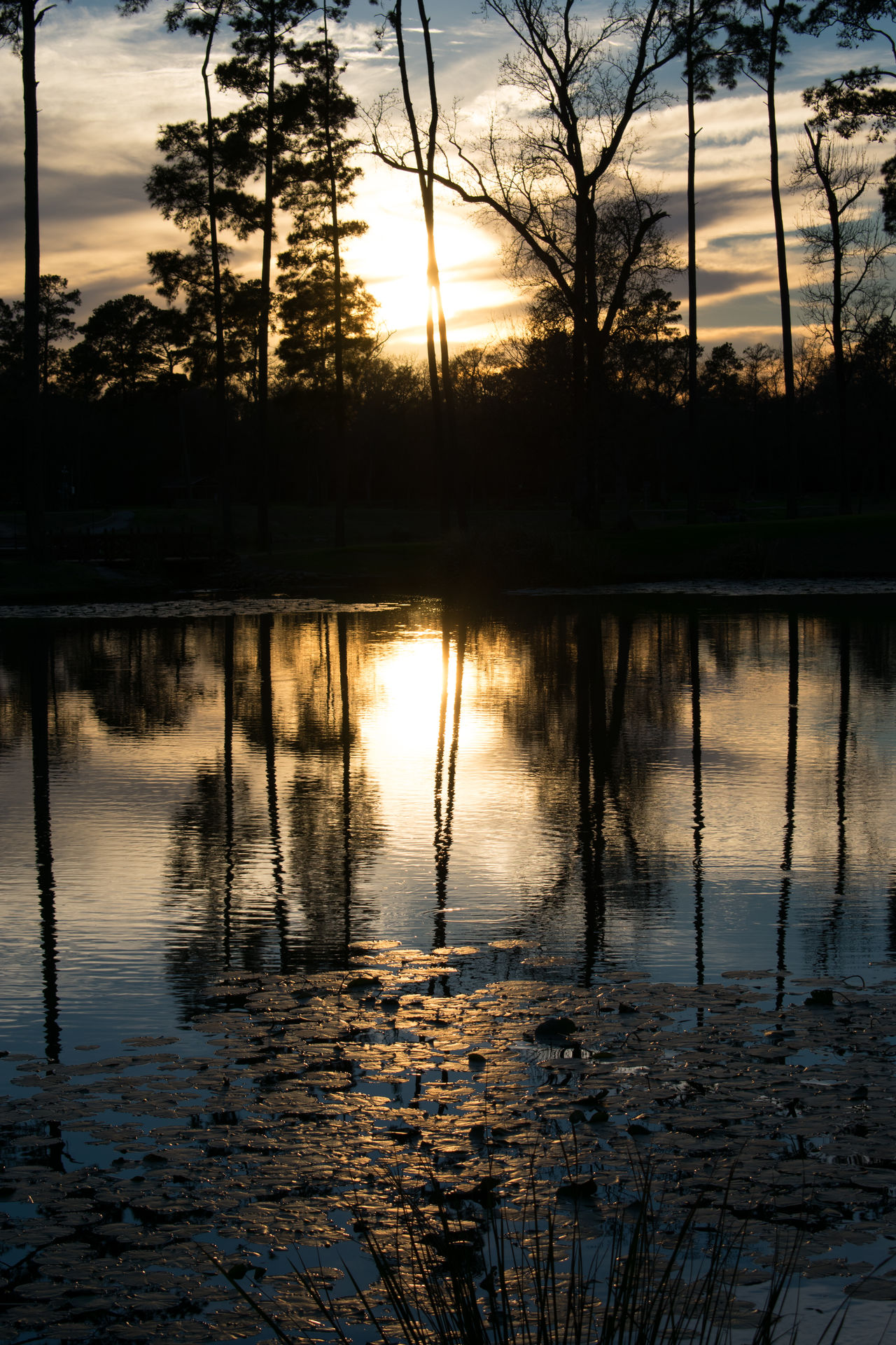 Beauty In Nature Cloud - Sky Day Lake Nature No People Outdoors Reflection Scenics Silhouette Sky Sunset Tranquil Scene Tranquility Tree Water