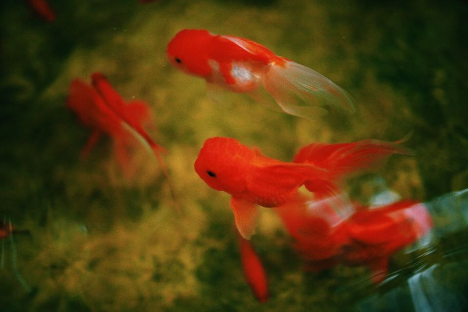 Beautiful stock photos of peace, Animal Themes, Animals In The Wild, Day, Fish