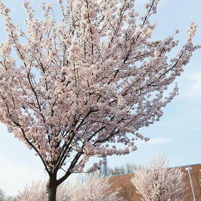/ Überall diese wundervollen Bäume.😍😄 Ichliebefrühling Bäume Loveit Nicethoughts Saturday Heart