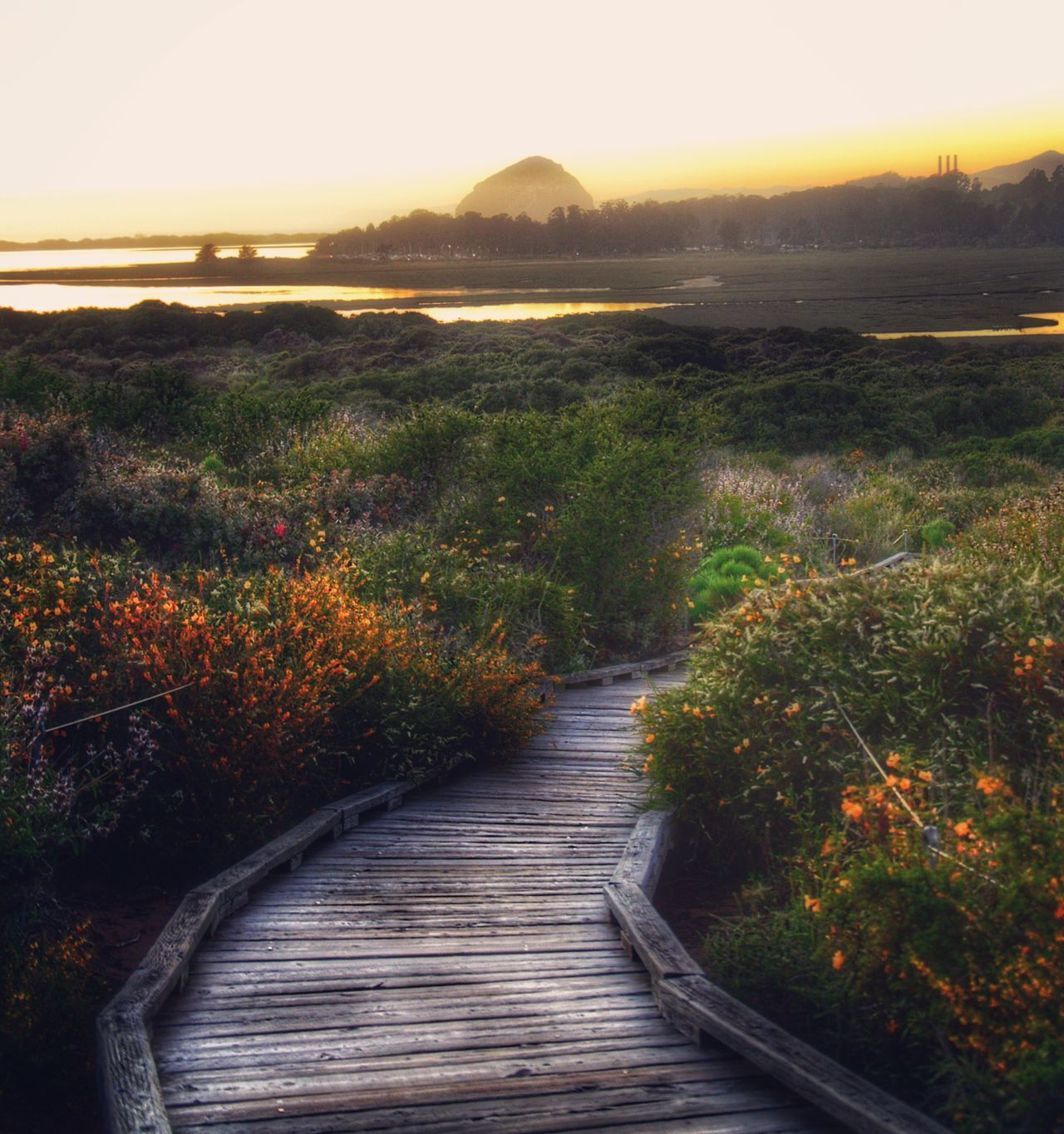 Estuary Nature Tranquil Scene Beauty In Nature Scenics Sunset Tranquility The Way Forward Grass Landscape Outdoors Plant Growth No People Autumn Mountain Water Day Tree Sky California Los Osos, Ca Eye4photography  Beauty In Nature Nature Travel Destinations