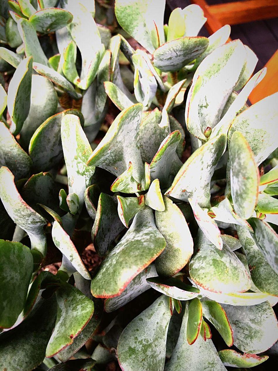 Succulents 💚 Taking Photos Chilling Hello World Sunshine Plants My Iphine