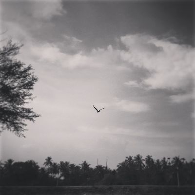 Taking Off!! :) :) Abstract Bloggius Instacapture Hucciofficial amazing abstract hosteltime coffeeyouneed instaabstract instagood capture clicks instaclick blackandwhite instablackandwhite instanature instaeagle