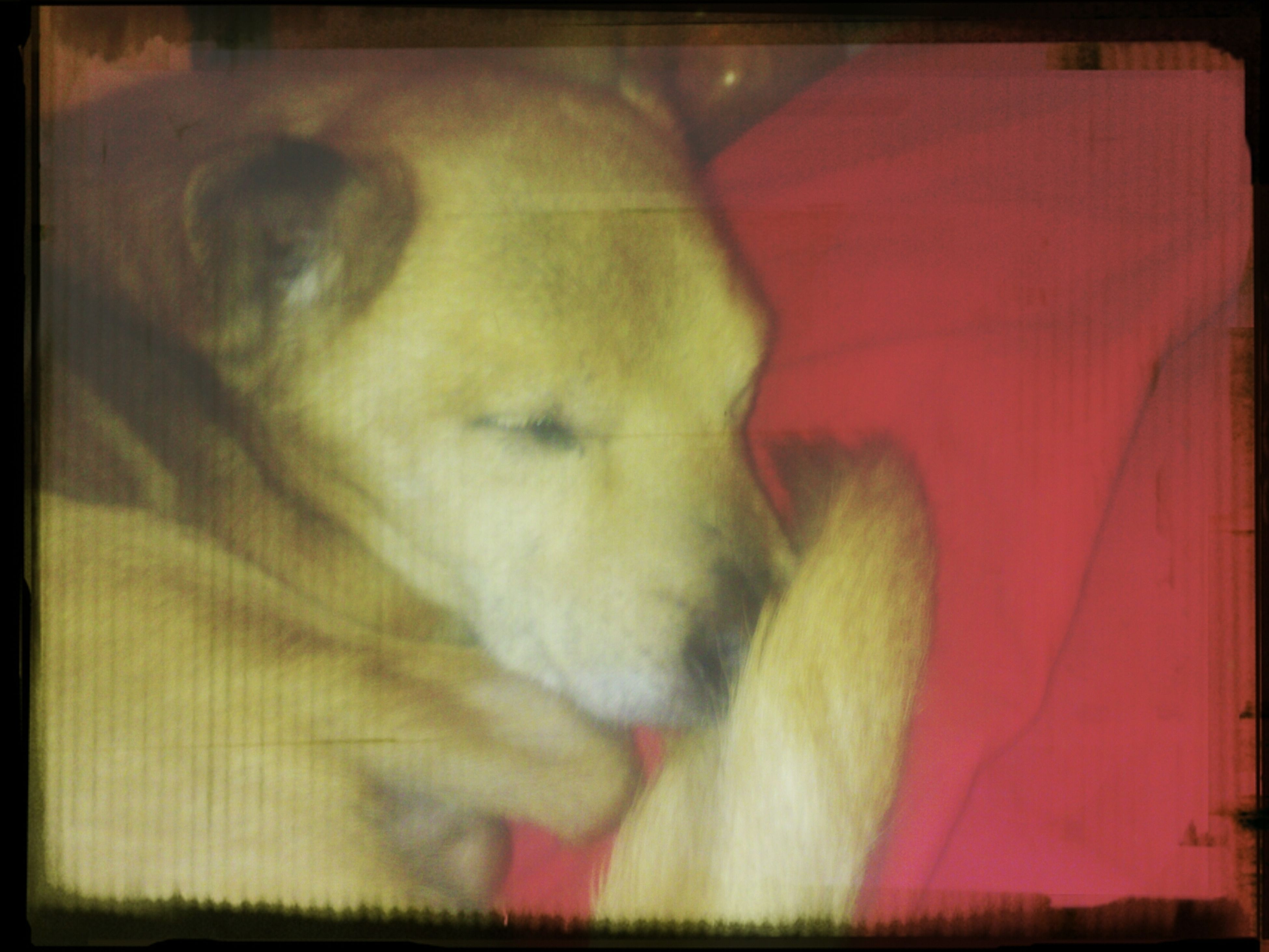 transfer print, auto post production filter, indoors, lifestyles, men, rear view, full length, leisure activity, dog, domestic animals, person, pets, side view, one animal, casual clothing, standing, red, mammal