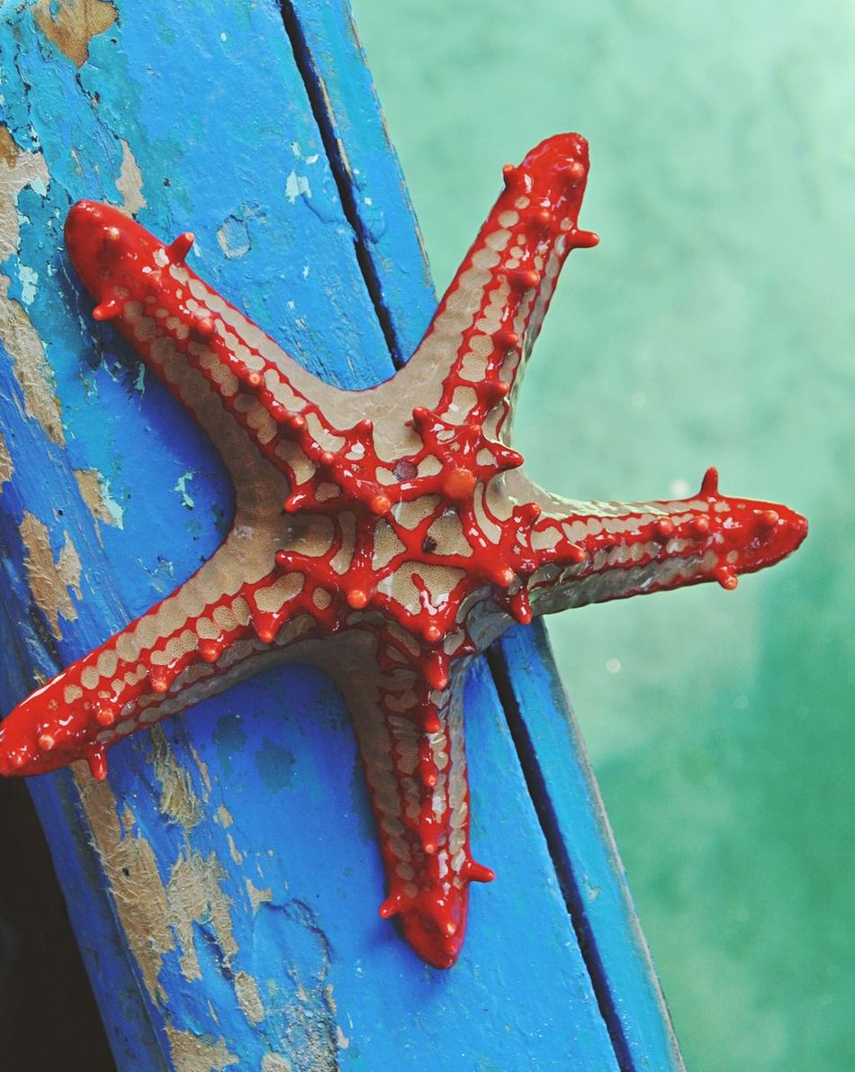 Beautiful stock photos of starfish, Animal Themes, Animals In The Wild, Blue, Close-Up