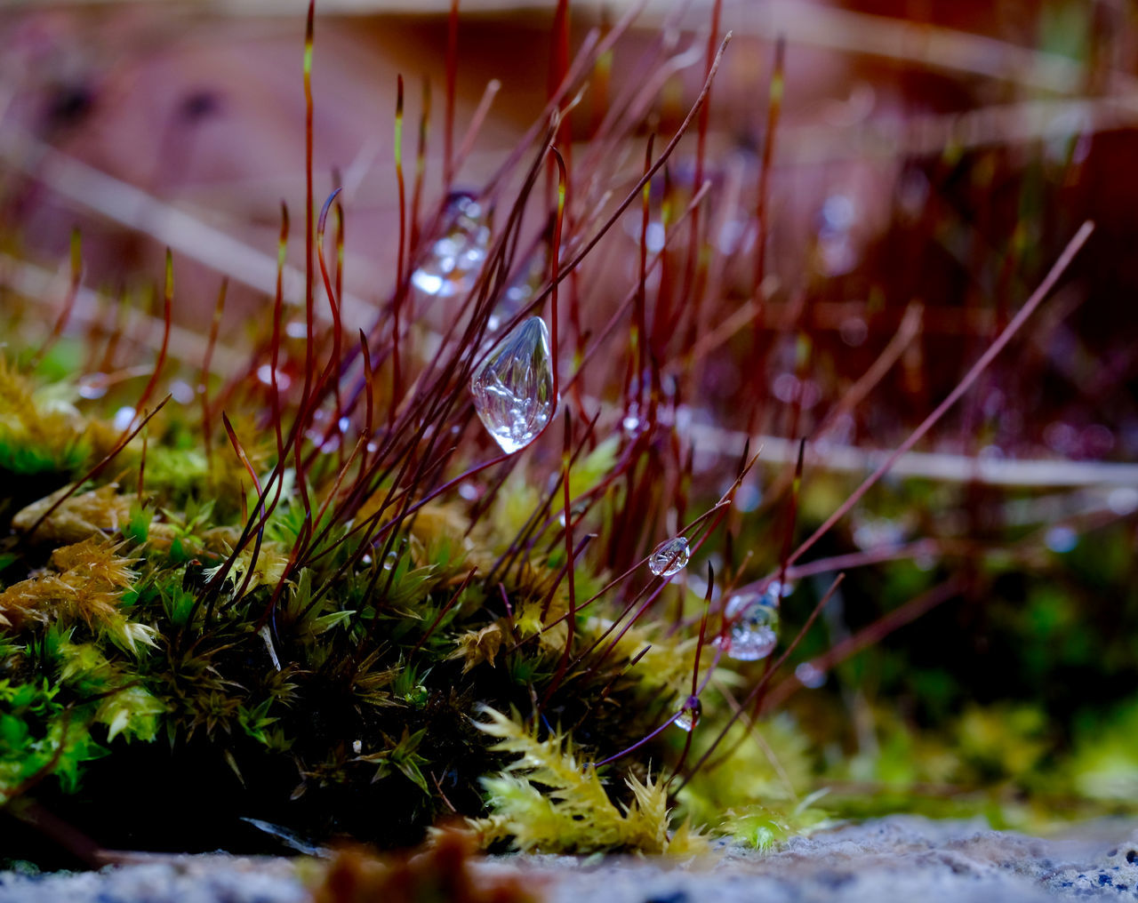 Beauty In Nature Close-up Icicles Macro Nature Macro Photography Moss Mossporn Nature Outdoors