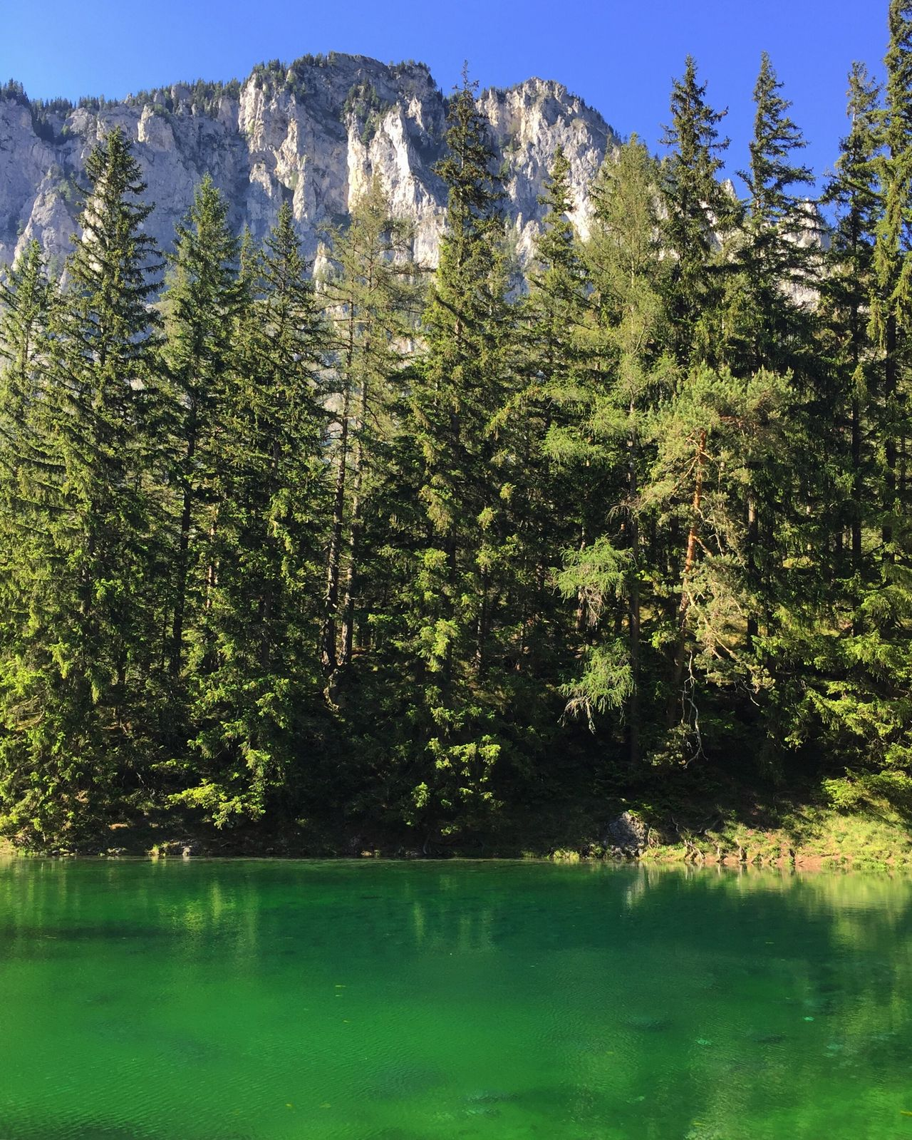 Tree Forest Nature Beauty In Nature Scenics No People Pine Tree Mountain Tranquility Day Water Reflection Green Color Outdoors Tranquil Scene Growth Lake Landscape Plant Sky