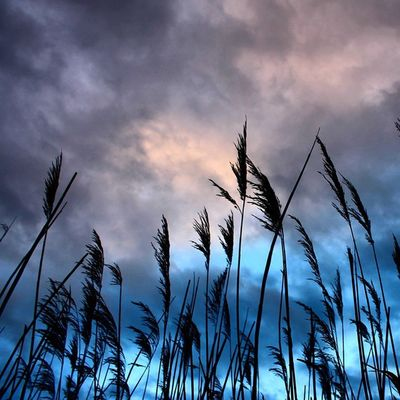 Oldpic Grass Sky Skyporn Skylovers Sky_perfection 😚 Sky_captures Diewocheaufinstagram Canon_photos Canon Instagood Instagoodmyphoto Nature_wizards Worldbestgram Instaamici Ig_worldclub Ig_captures_sky Rsa_sky Nature 😚 Contrast Coloroflife Colour_stars Exklusive_shots potd lifeisstrange 💕