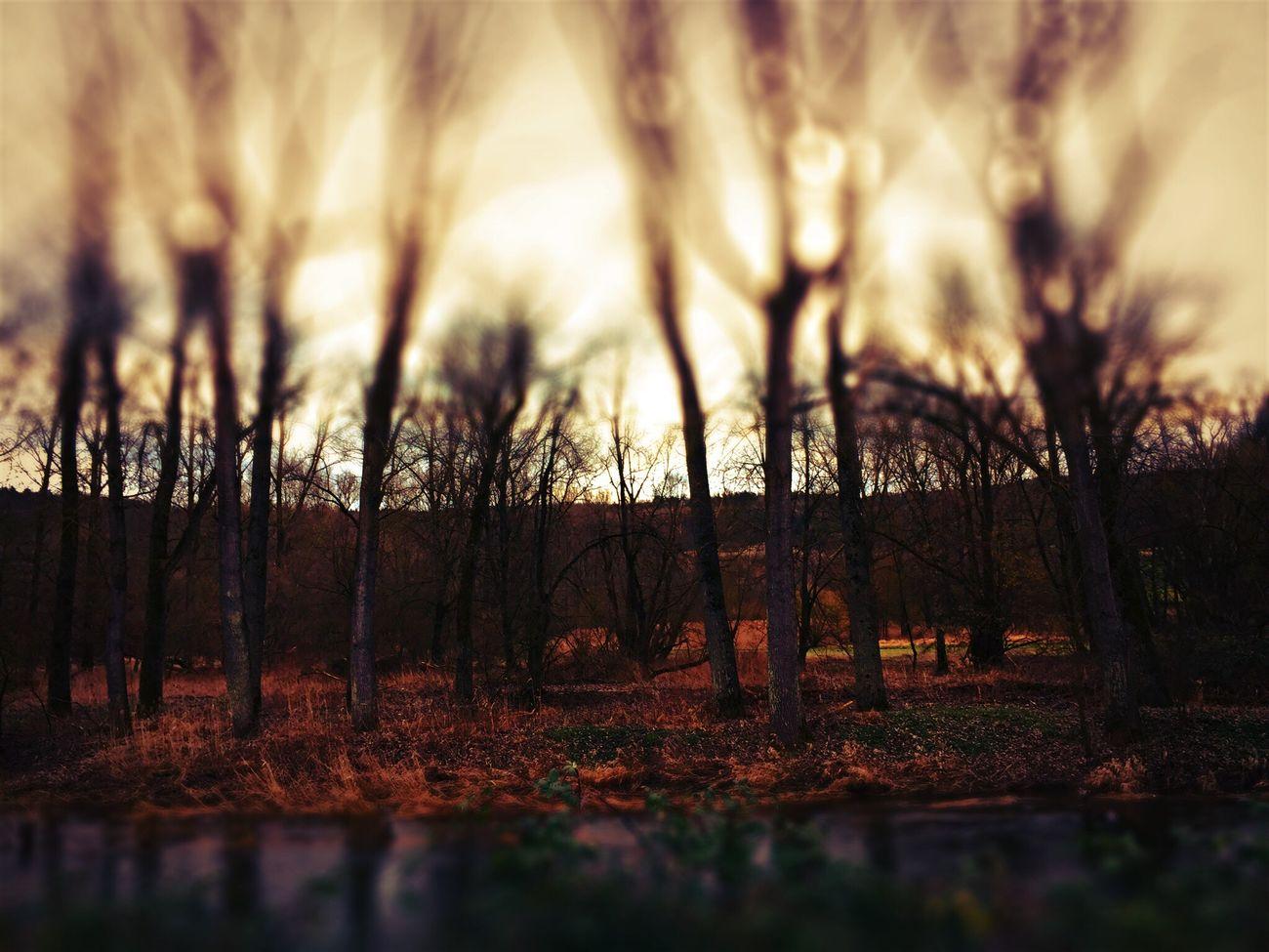 Hello wonderful world.... Like burning trees Germany Tree Trees Landscape Mystery Dark