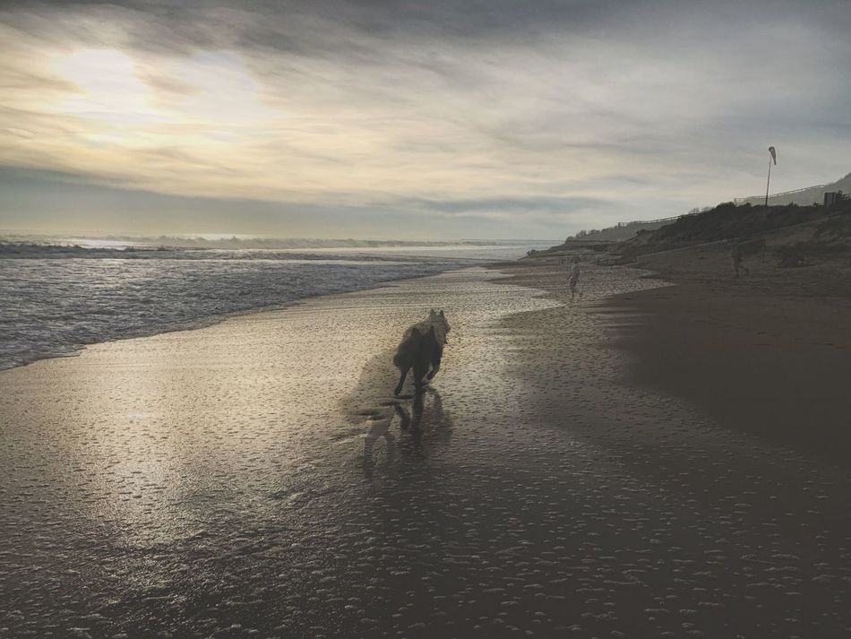 Long Goodbye Beach Sky Water Nature Sea Sand Scenics Real People Beauty In Nature Cloud - Sky Outdoors Walking Togetherness Sunset Lifestyles Wolfdog Whitewolf Running Dog Long Goodbye