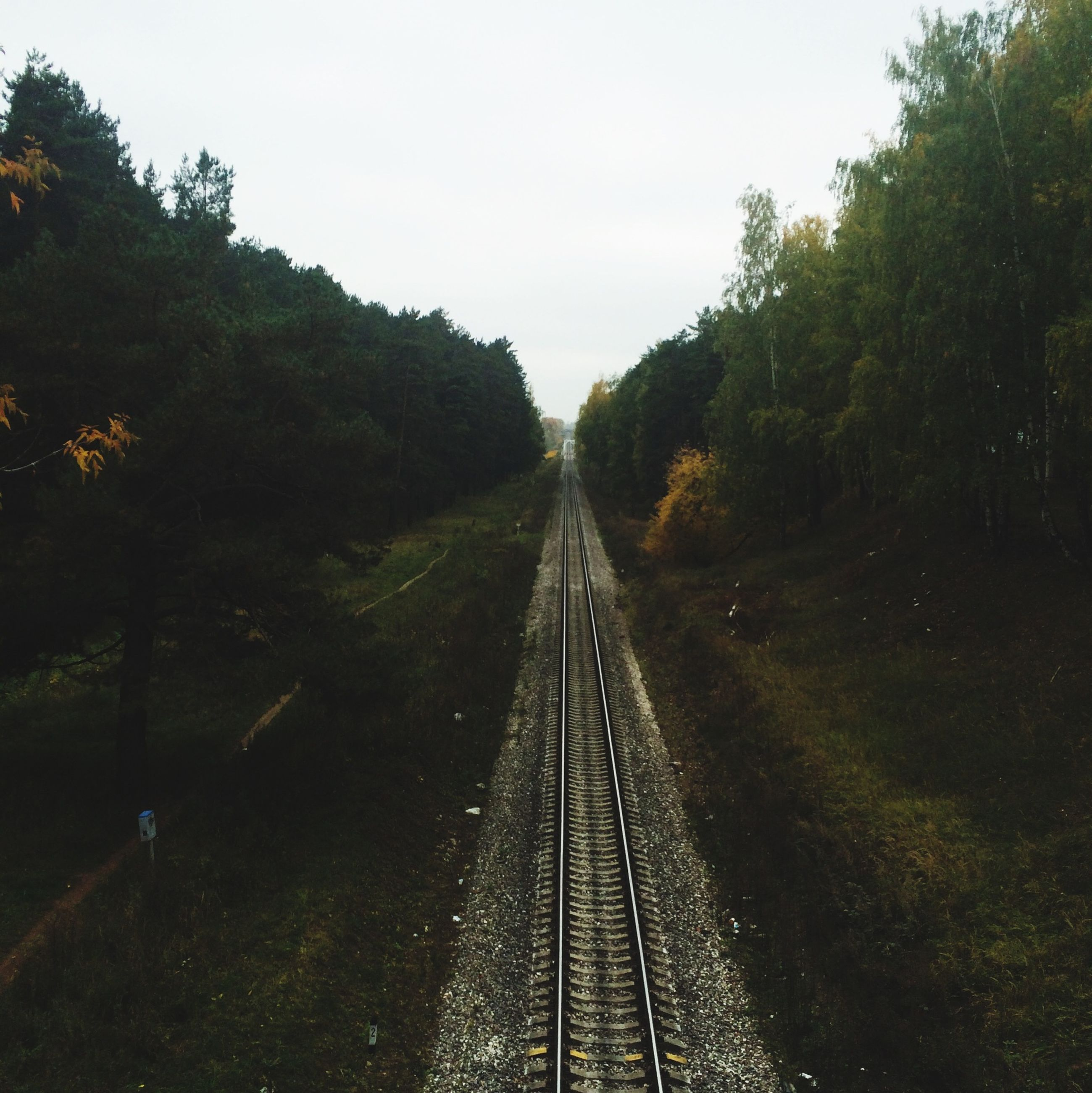 transportation, the way forward, tree, diminishing perspective, railroad track, vanishing point, rail transportation, clear sky, growth, sky, long, forest, tranquility, nature, day, connection, no people, railway track, straight, outdoors