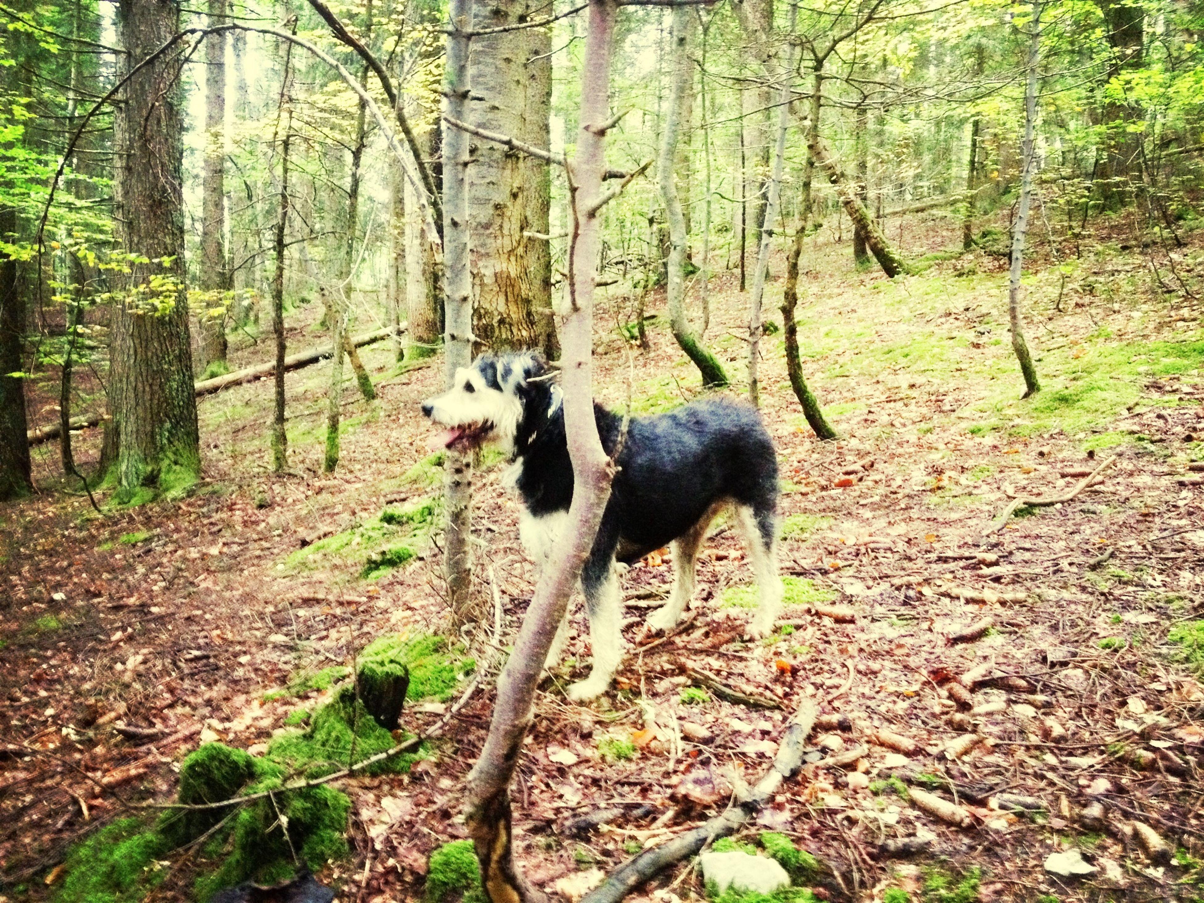 Punchie dans la forêt
