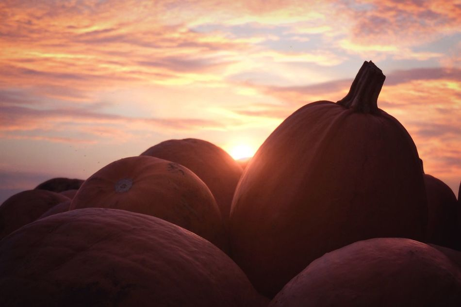 T h e L e f t o v e r s 🎃 Beauty In Nature Close-up Day Ground Halloween Harvest Low Angle View Mood Moody Sky Nature Nature Photography Nature_collection No People Orange Color Outdoors P510 Pumpkin Scenics Silhouette Sky Sunset Sunset Silhouettes Sunset_collection Tadaa Community Tadaa Friends