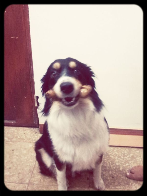 Mi tucho Bestfriend Bordercollie moshito's dog First Eyeem Photo