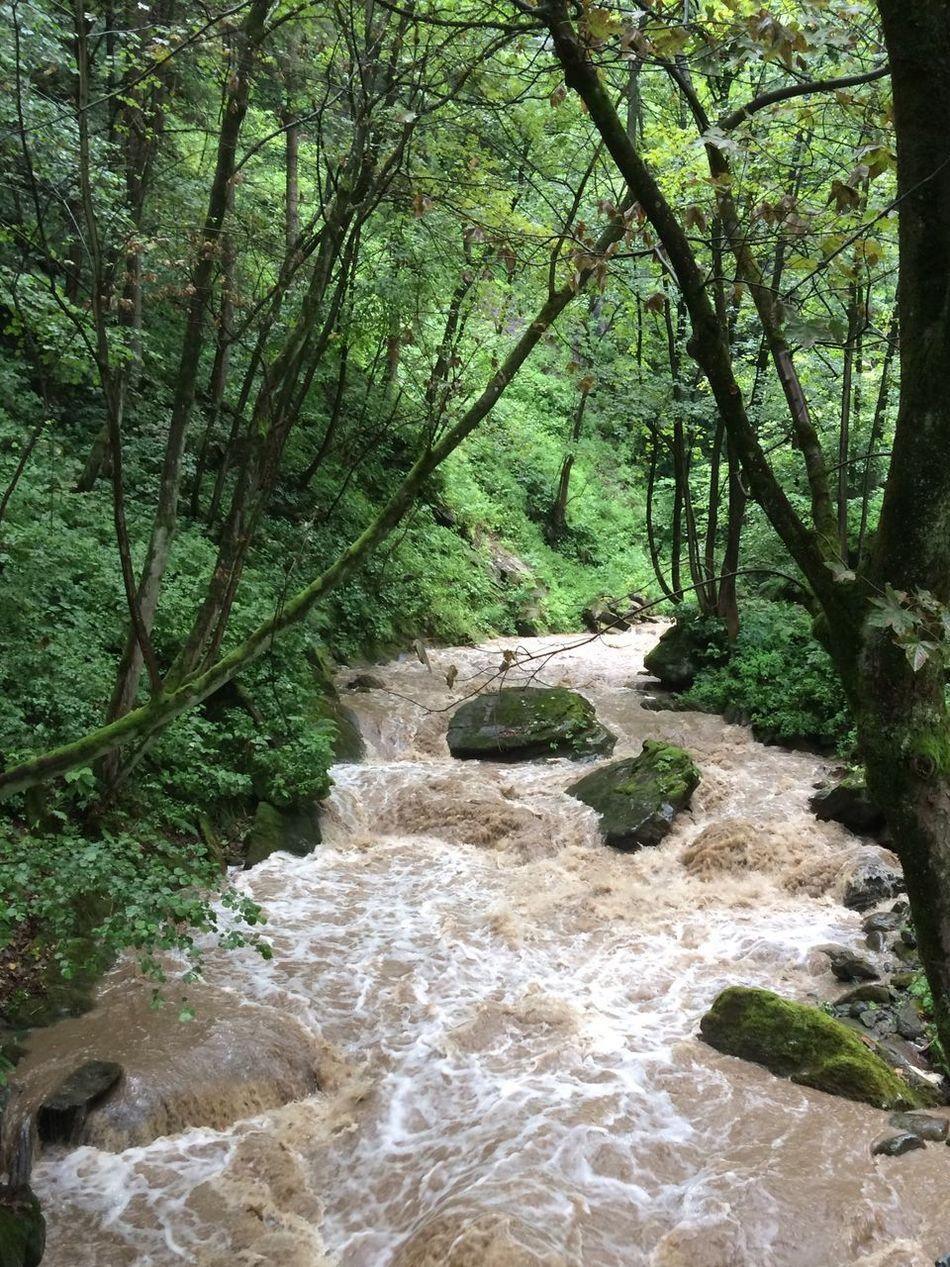 Wild Nature Heavy Rain Wild River Water