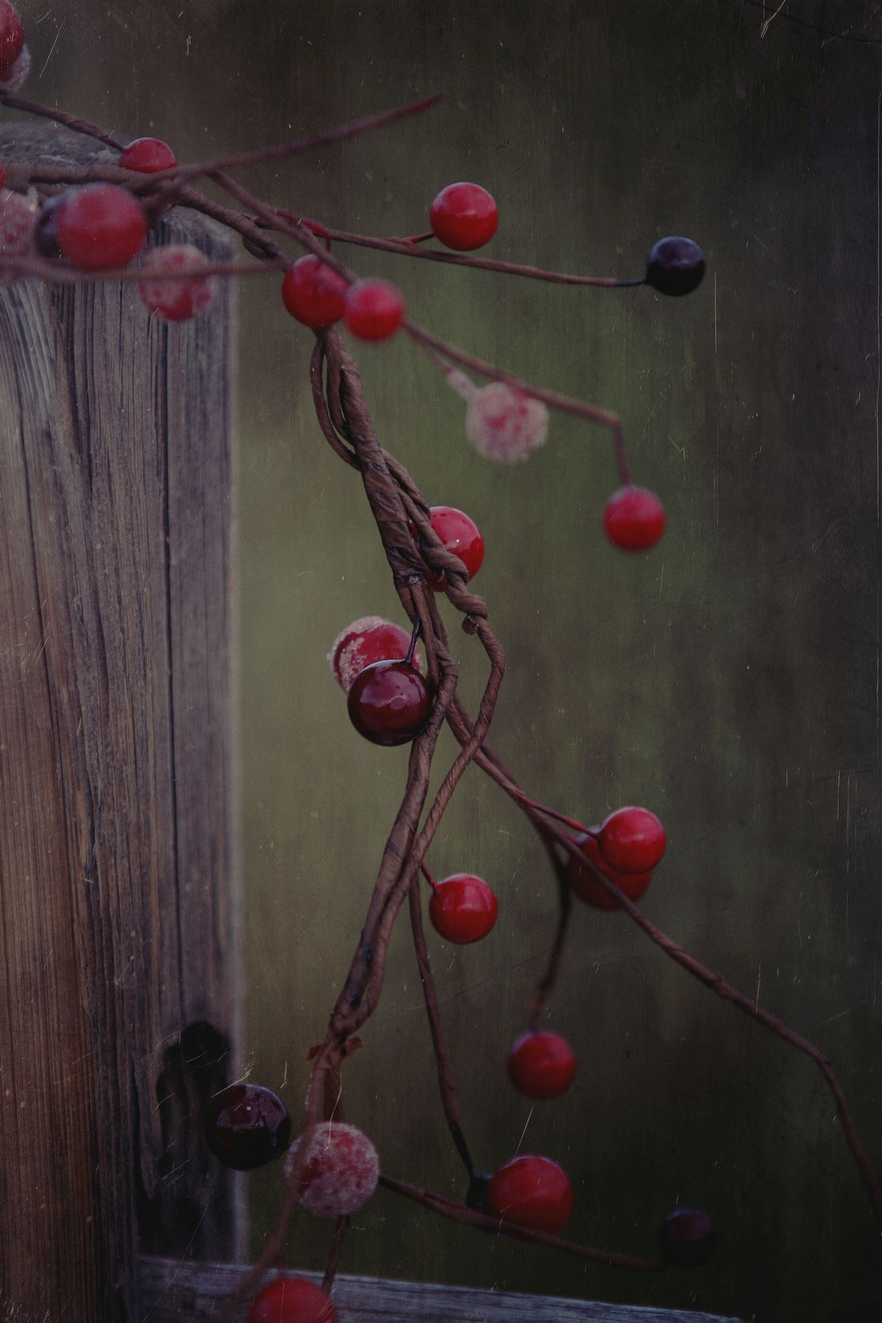 Christmas Decorations Check This Out Photography Taking Photos Nature_collection Photo Berries