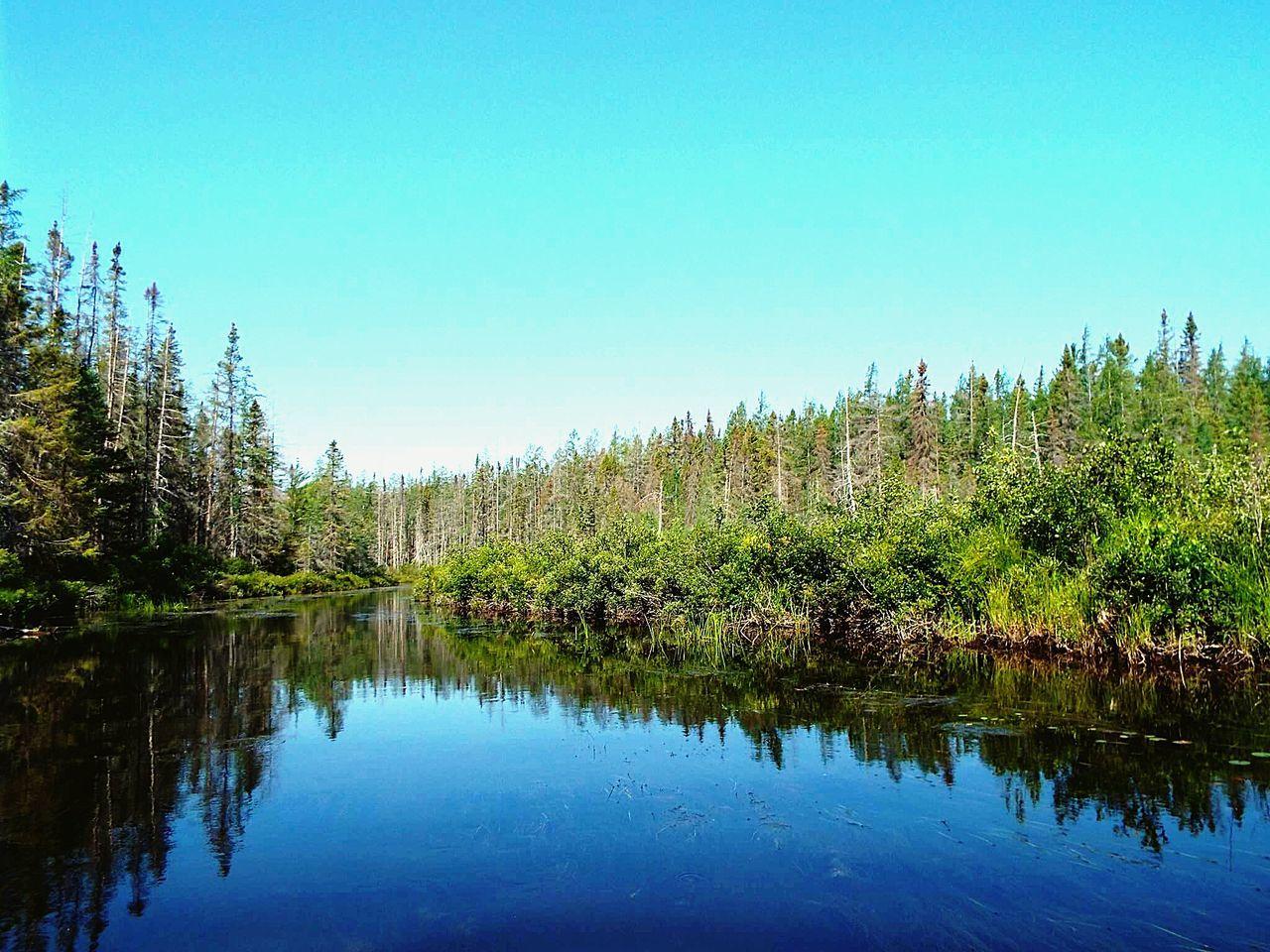 Nature Forest River Algonquin Park Algonquinprovincialpark Green