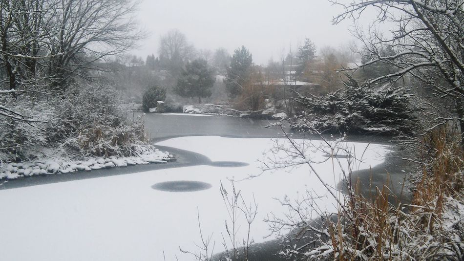 Snow covered pond!! Relaxing Enjoying Life Hanging Out Taking Photos