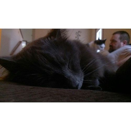 Garth cat napping on Sunday afternoon. Catsofinstagram Catnap Crazycatlady Cats