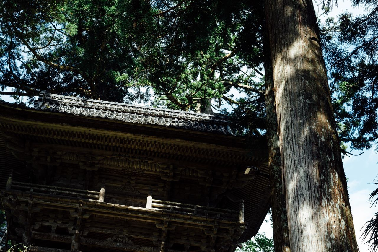 Light And Shadow Sunlight Temple Gate Wooden Gate Low Angle View Tree Built Structure Travel No People Green Color Obama Fukui Atmosphere Temple Japanese Temple Japan Photography Non-urban Scene Temple - Building