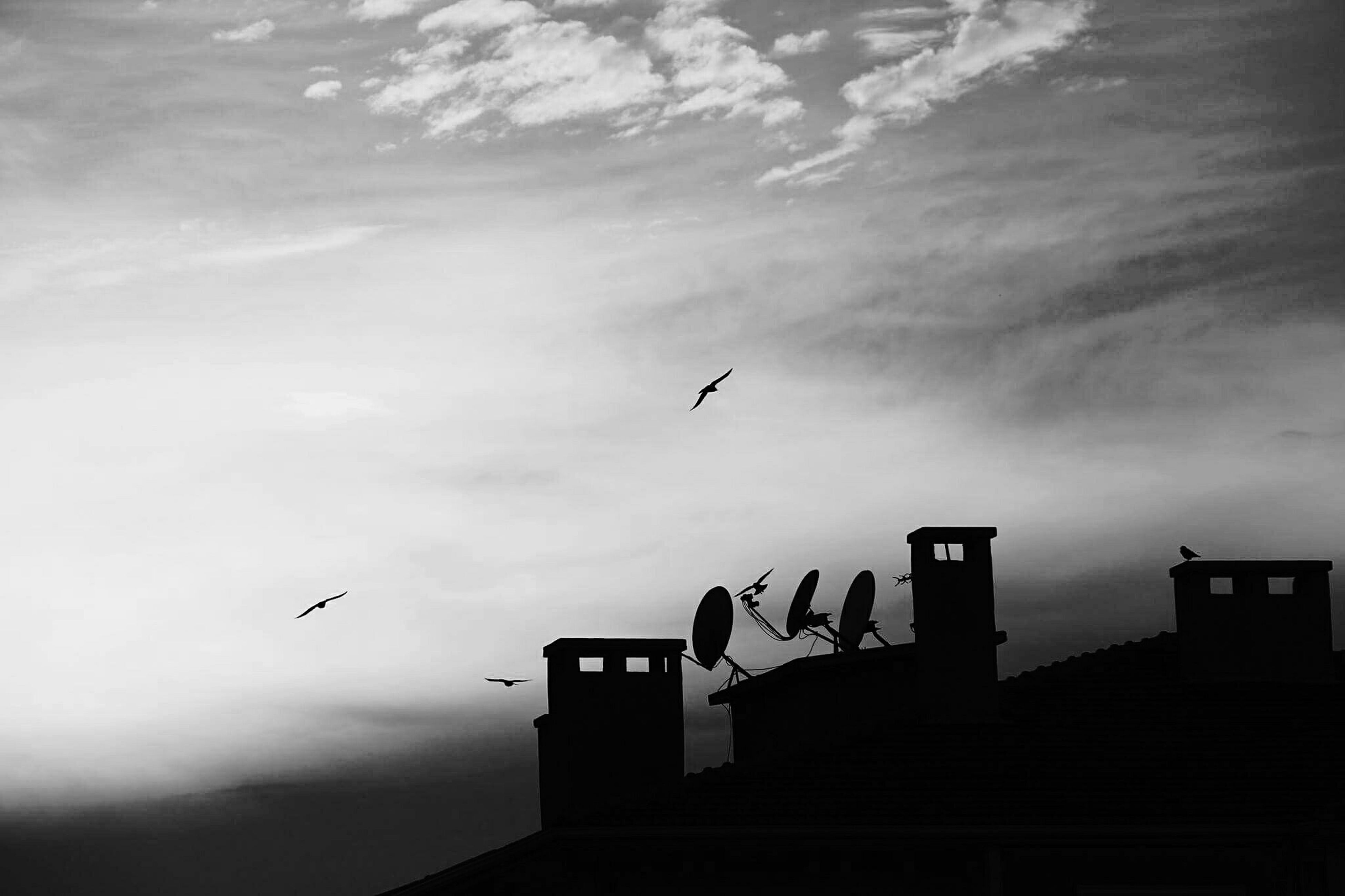 bird, flying, silhouette, low angle view, sky, animal themes, built structure, architecture, building exterior, animals in the wild, cloud - sky, wildlife, cloudy, dusk, cloud, nature, outdoors, mid-air, sunset