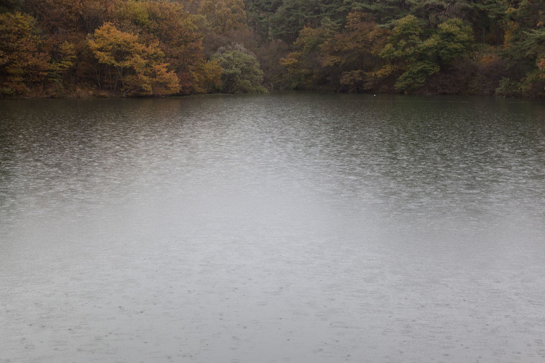 autumn raining pond at Namwon in Jeonbuk, South Korea Autumn Pond Raining Autumn Autumn Pond Beauty In Nature Day Fall Lake Nature No People Outdoors Raining Pond Scenics Tranquil Scene Tranquility Tree Water
