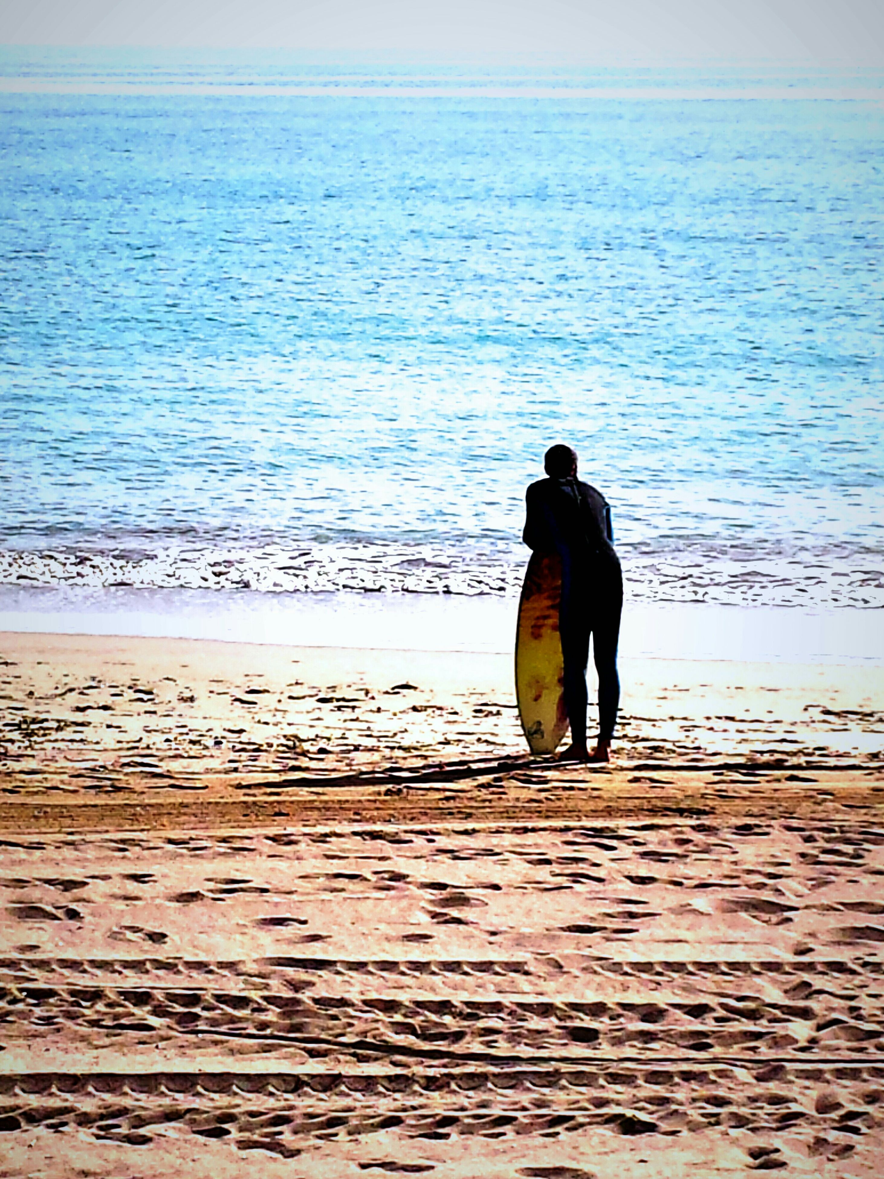 water, sea, dog, rear view, full length, pets, beach, domestic animals, men, lifestyles, one animal, walking, horizon over water, leisure activity, shore, standing, animal themes, tranquil scene