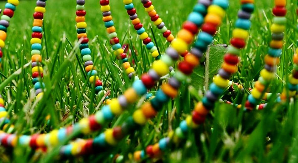 Colors Everywhere Fresh Green Grass