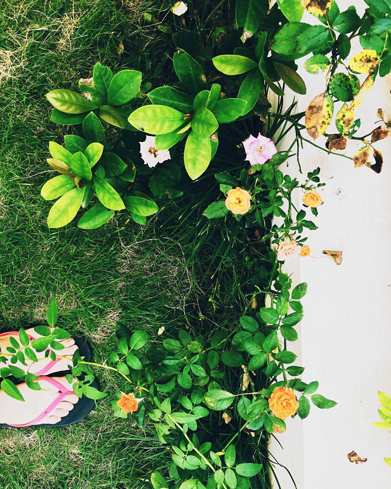 Mybeautifulholiday Tinyflowers Grassland Sofreshsocool Myfootwearstories The magic of my summer ⛅️🌿🌼 First Eyeem Photo