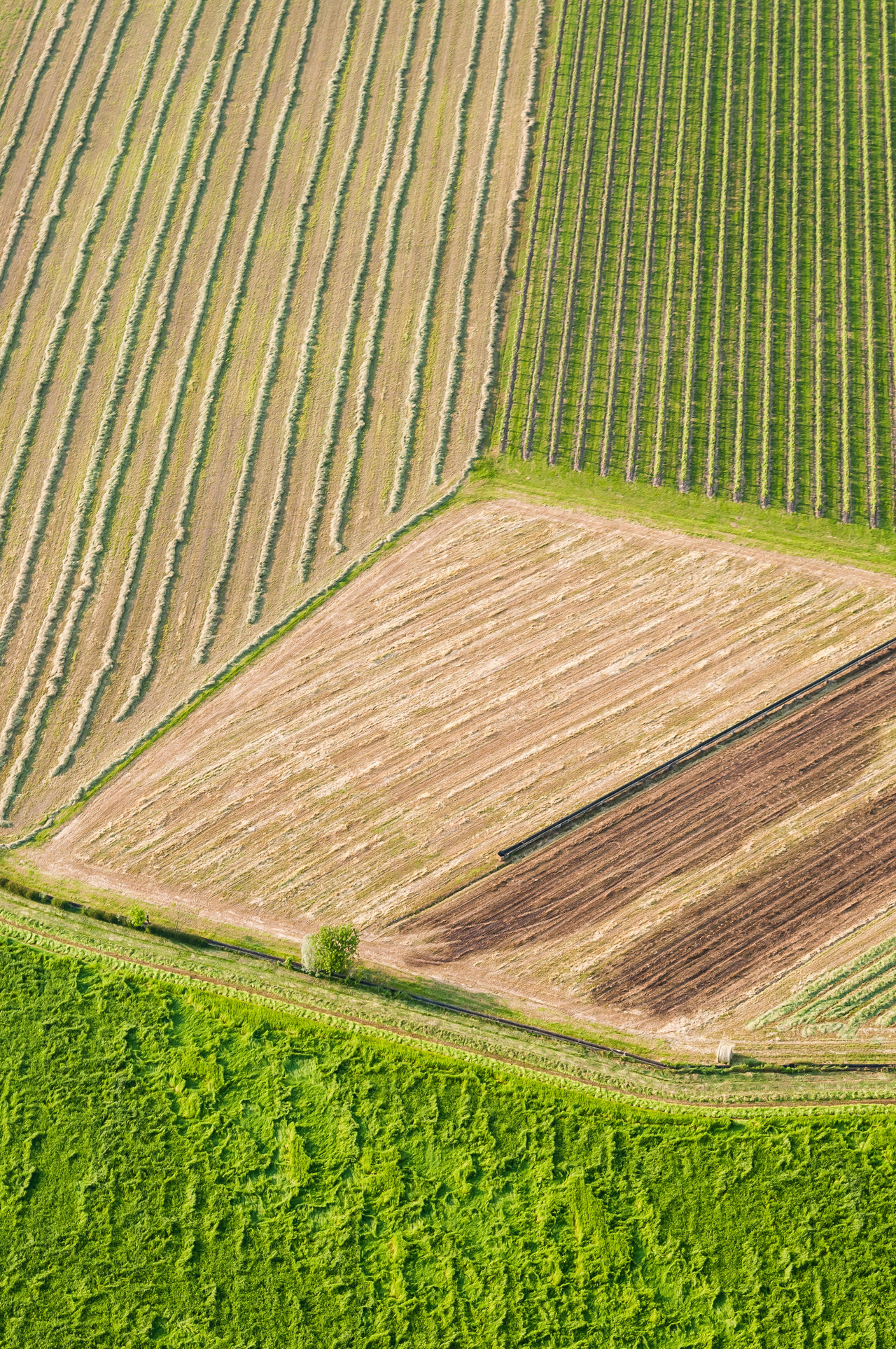 Aerial Photography Agricultural Land Agriculture Field Flying High Green Green Color Italy Landscape Nature Prosecco Prosecco Land Veneto