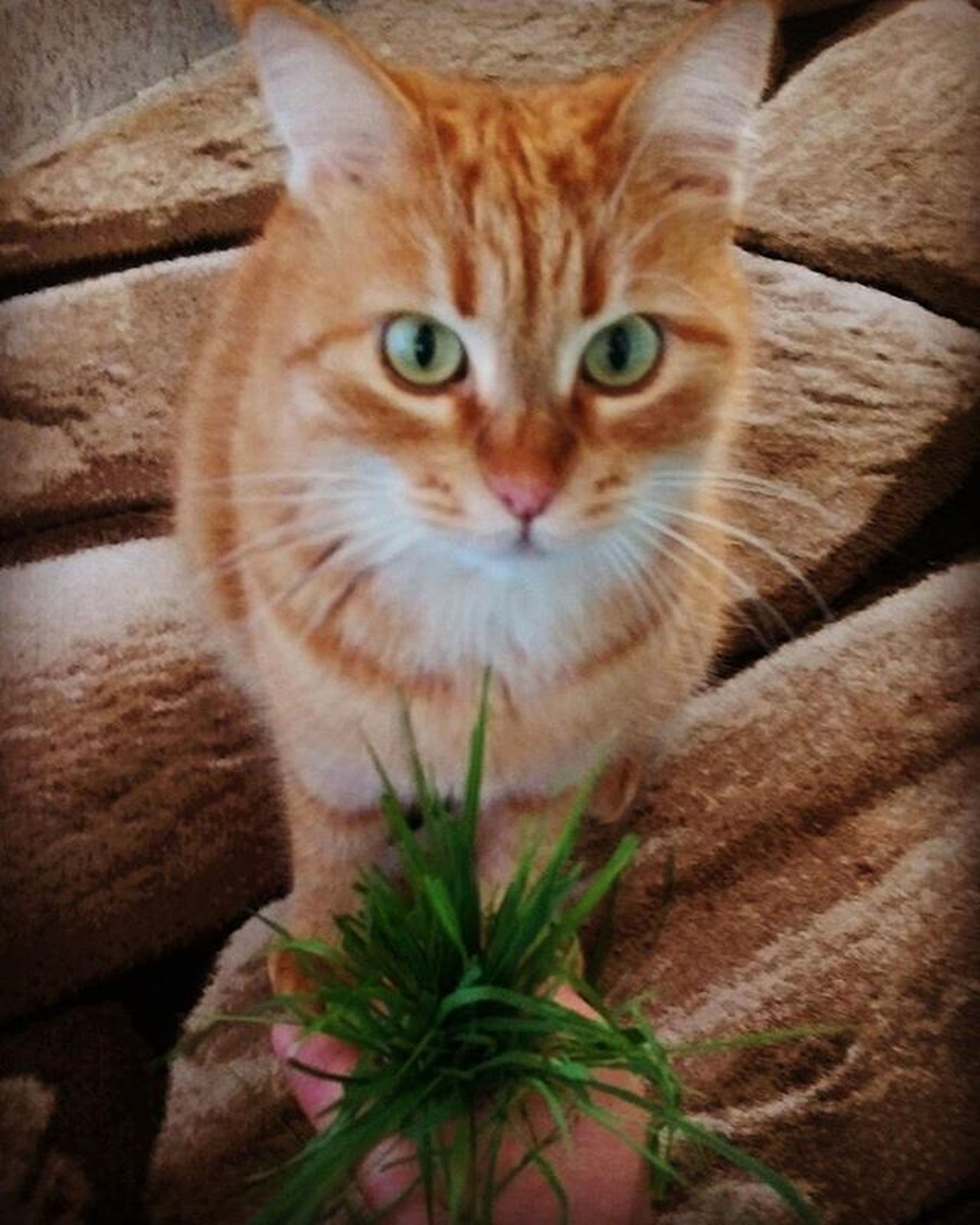 Bana öyle bakma anlayacaklar. SeniSeviyorum Sapsik Kedi Justloveyou Cat Mylove