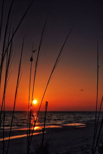 Gentle sway ... Gulf Coast Sunset Waves Waves, Ocean, Nature Beauty In Nature Red Water Grassy Florida Sunset Florida Coast