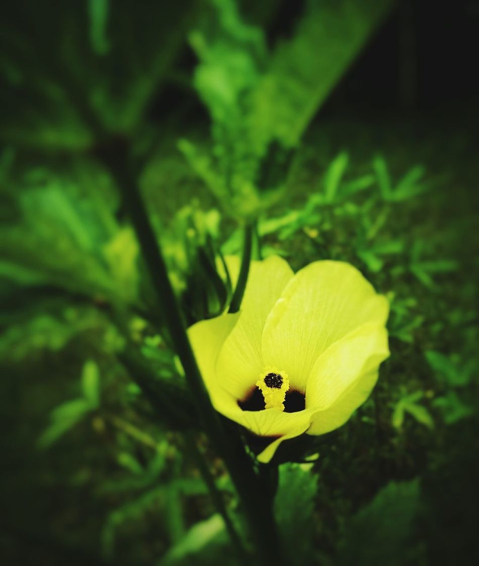 Fiona, The OO mission Flower Flowers,Plants & Garden Mobilephotography Agriculture Nature Beauty In Nature Green Nature Plant