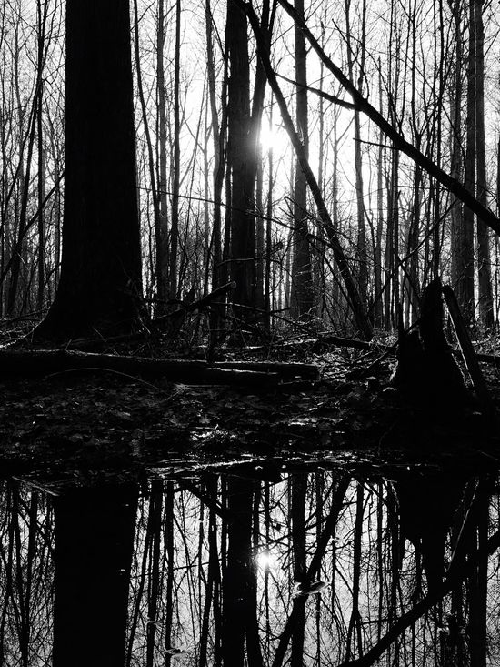 A Forest Lost In A Forest  Swamp Forest Wet Reflection Dark Side Winter Sun Eye4black&white  High Contrast