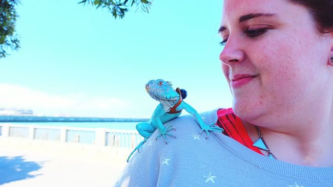 felling green First Eyeem Photo Bayarea Sanfrancisco Embarcadero Pet Iguana Lovelypet