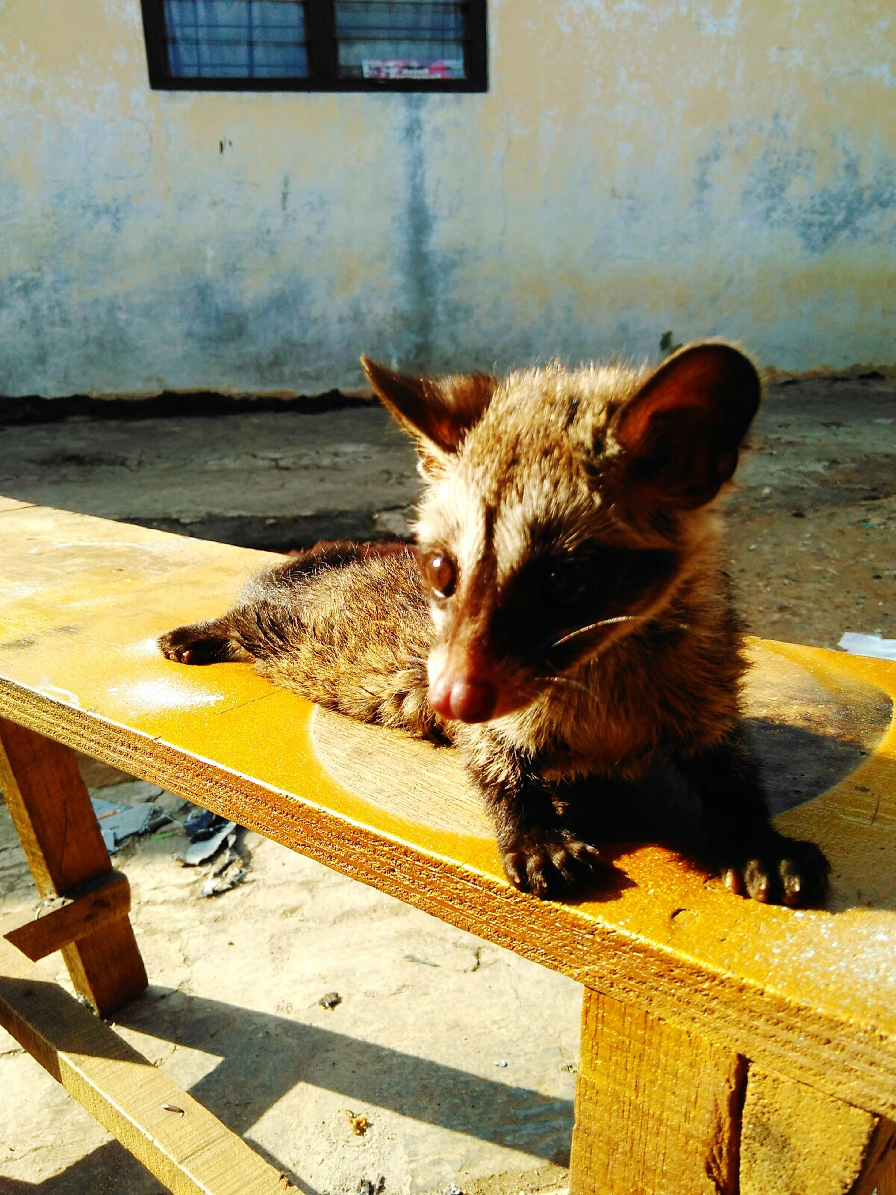 domestic animals, pets, one animal, animal themes, mammal, domestic cat, cat, feline, sitting, whisker, relaxation, sunlight, outdoors, looking away, day, no people, built structure, wood - material, full length, wall - building feature